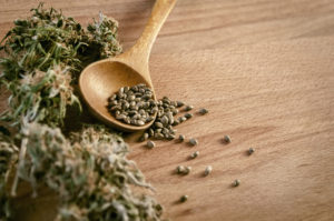 graines de chanvre et santé