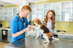 vétérinaire et chien beagle