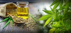 huile de chanvre, CBD, traitement de l'arthrose