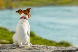 Donner du CBD à son chien pour traiter certaines maladies est possible.