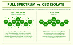 Pour éviter un résultat positif lors du test salivaire, il est recommandé de consommer du CBD issu de l'isolat de CBD et non du spectre complet (full spectrum)