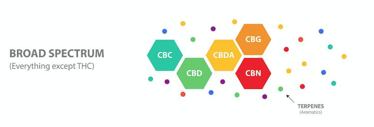 Le spectre large de CBD contient tous les cannabinoïdes et les terpènes de la plante de cannabis sativa mais ne contient pas de THC.