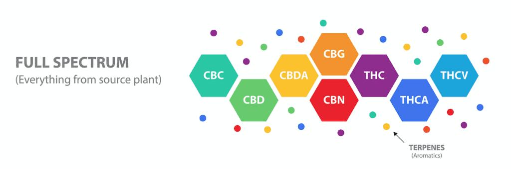 Le spectre complet de CBD contient tous les composés de la plante de cannabis sativa.