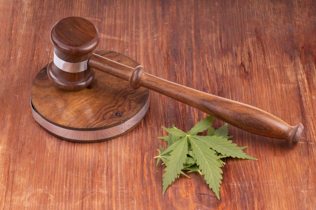 une proposition de loi sur la vente de CBD en France est en cours de rédaction par l