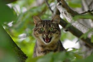 chat cbd aggressivité